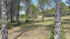 Terrain  de 2243 m² Bagnols-en-Forêt par MAS PROVENCE