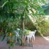 Maison / villa maison 5 pièces Pezenas - Photo 12