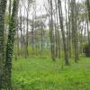 Revenda - Terreno - 2343 m2 - Sommecaise - Photo