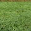 Terrain terrain constructible Royan - Photo 3