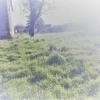 Terrain terrain à bâtir Tresboeuf - Photo 1