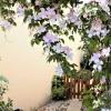 Maison / villa maison montelimar 4 pièces 88 m² Montelimar - Photo 7