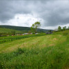 Terrain terrain constructible Verrey sous Salmaise - Photo 1