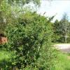 Terrain terrain à bâtir Verrey sous Salmaise - Photo 1