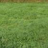 Terrain terrain à bâtir Breuillet - Photo 3