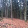 Vente - Terrain - Lalling - Photo