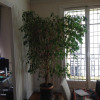 Appartement appartement 4 pièces Neuilly-sur-Seine - Photo 5