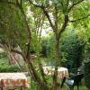 Maison / villa maison ancienne Verdonnet - Photo 1