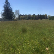Terrain 2860 m² Cussac (87150)