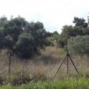Terrain 700 m² Tavel (30126)
