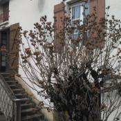 Saint Léger sur Dheune, Maison en pierre 5 pièces, 110 m2
