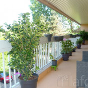 Vente appartement Verrieres Le Buisson