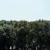 Terrain 1328 m² Piolenc (84420)