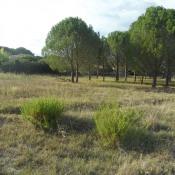 Terrain 500 m² Vidauban (83550)