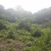 Vente terrain St Francois