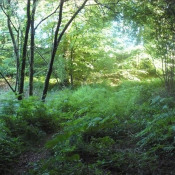 Vente terrain Plumelec 9000€ - Photo 1