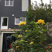Vente maison / villa Loos