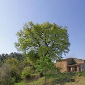 Sinalunga, 3 pièces, 250 m2