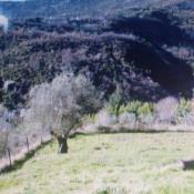 Terrain 7000 m² Contes (06390)
