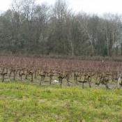 Terrain 580 m² Sainte-Eulalie (33560)