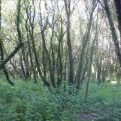 Vente terrain Plumelec 9000€ - Photo 2