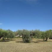 Terrain 1200 m² Lorgues (83510)