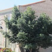 vente Immeuble Canet en Roussillon