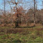 Terrain 1200 m² Vendays-Montalivet (33930)