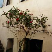 vente Maison / Villa 4 pièces Calvisson