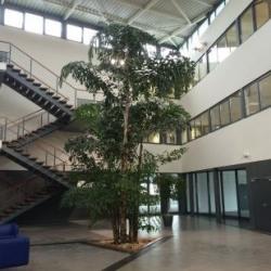 Location Bureau Isneauville 350 m²