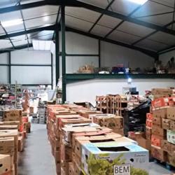 Vente Local d'activités Sainte-Foy-d'Aigrefeuille 483 m²