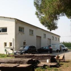 Location Local d'activités Lattes (34000)