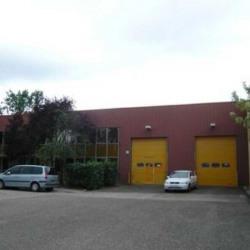 Location Local d'activités Lingolsheim 1301 m²
