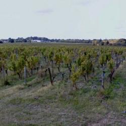 Terrain  de 1000 m²  Saint-André-de-Cubzac  (33240)