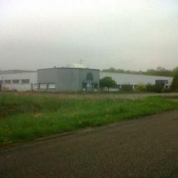 Vente Local d'activités Burnhaupt-le-Haut 3145 m²