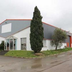 Location Local d'activités Saint-Georges-d'Orques 870 m²