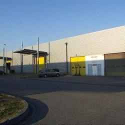 Location Local d'activités Labège 1236 m²