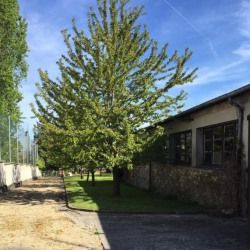 Location Local commercial Torcy 0 m²