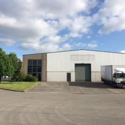 Location Local d'activités Avelin 1176 m²