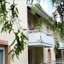 Appartement T2 loue