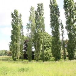 Vente Terrain Chuelles 4660 m²