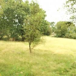Vente Terrain Saint-Urbain 40000 m²