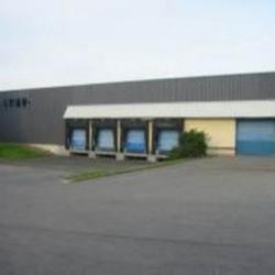 Location Local d'activités Égly 4985 m²