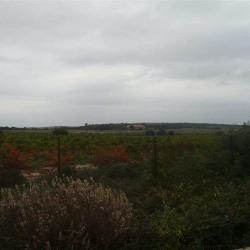 Location Local d'activités Montpellier (34000)