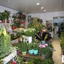 Vente Local commercial Rozay-en-Brie 80 m²