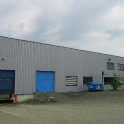 Vente Entrepôt Geispolsheim 3250 m²