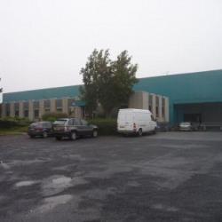 Location Local d'activités Templemars 1570 m²