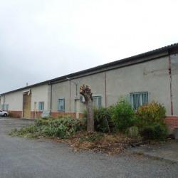 Location Local d'activités Launaguet 225 m²