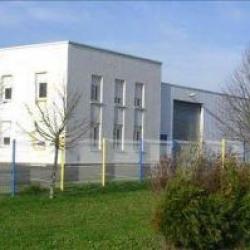 Location Local d'activités Notre-Dame-d'Oé 736 m²