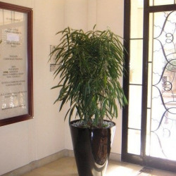 Location Bureau Paris 8ème 698 m²